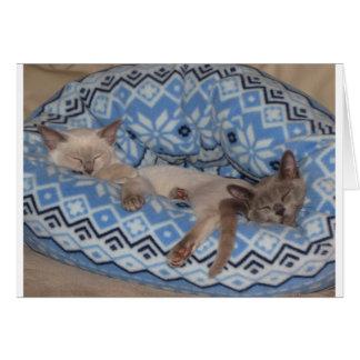Sova för två Tonkinese kattungar Hälsningskort
