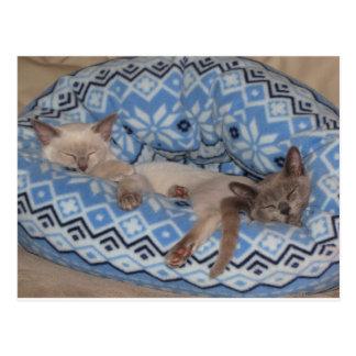 Sova för två Tonkinese kattungar Vykort