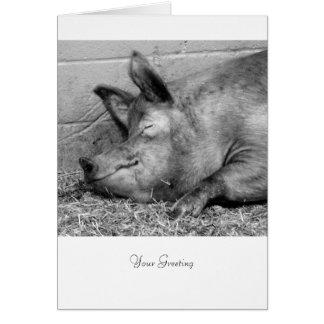 Sova grisen för tillfällen hälsningskort