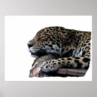Sova jaguar ingen bakgrund poster