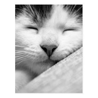 Sova kattungen vykort