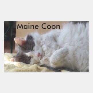 Sova klistermärken för Maine Coonkatt