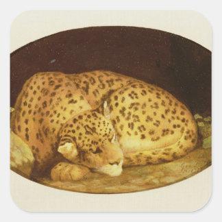 Sova leoparden, 1777 (emalj på kexen fyrkantigt klistermärke