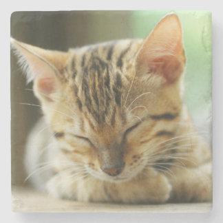Sova lite babykattunge stenunderlägg