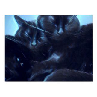 Sova svarta katter vykort