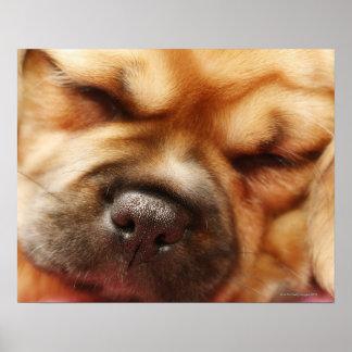 Sova tätt upp den Pugalier valpen Poster