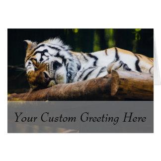 Sova tigern, stor katt, vilddjurfotografi hälsningskort