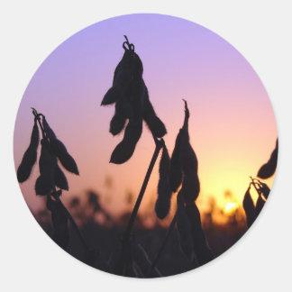 Soybeans på solnedgången runt klistermärke