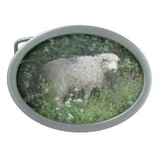 Spänner fast fluffiga får för gullig vit som äter