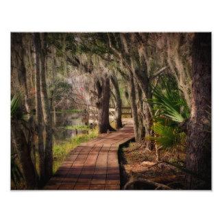Spansk Moss och Louisiana träsk Fototryck