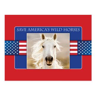 SparaAmerika vykort för hästar för vild