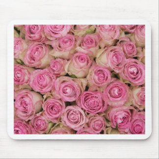 Sparklingrosa ros vid TheRoseGarden Mus Matta