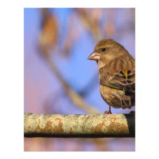 Sparrow Reklamblad
