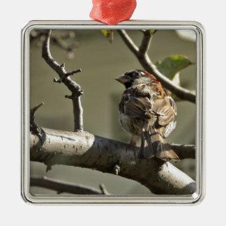 Sparrowen Julgransprydnad Metall
