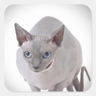 Sphynx katt fyrkantigt klistermärke