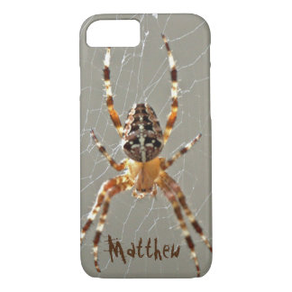 Spindel i webben
