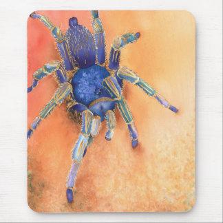 Spindel tarantel musmatta