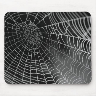 Spindelnät Musmatta