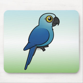 Spixs Macaw Musmatta
