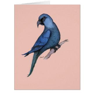 spixs macaw, tony fernandes jumbo kort