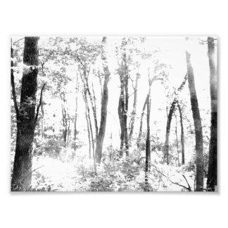 Spöklik skog fototryck