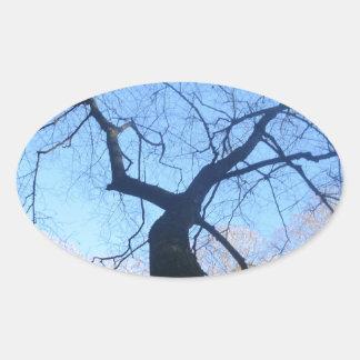 Spöklikt träd ovalt klistermärke