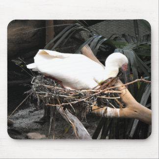 Spoonbillfågeln bygga bo på i Spanien Musmatta