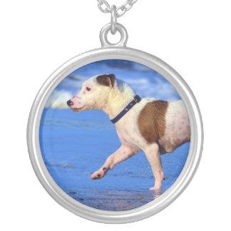 Spring för jackRussell Terrier på stranden Silverpläterat Halsband