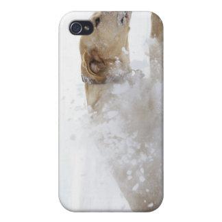 Spring för Labrador retriever till och med djup iPhone 4 Skydd