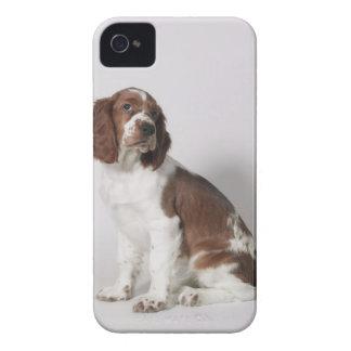 Springerspaniel Case-Mate iPhone 4 Fodraler