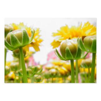 Springtime blommar i blom