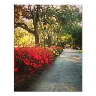 Springtime i Savannah Fototryck