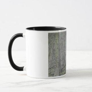 Spruce skog mugg