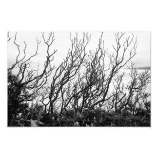 Squiggly träd fototryck