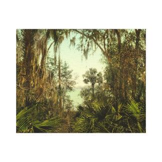 St Johns flodFlorida foto 1898 Canvastryck