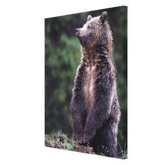 Stå Grizzlybjörn Canvastryck