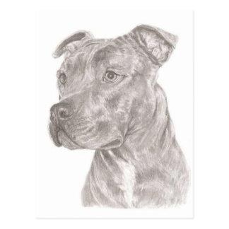 Staffordshire Terrier Vykort