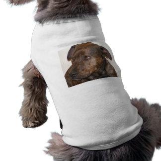 staffy amerikan långärmad hundtöja