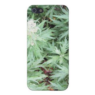 stankogräs iPhone 5 fodraler