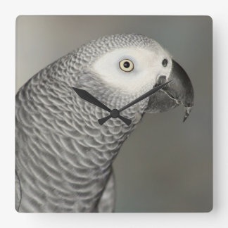 Stately afrikansk grå färgpapegoja fyrkantig klocka