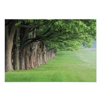 Stately ro av träd, Louisville, Kentucky. Fototryck