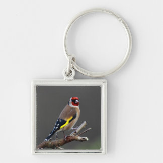Steglitsfågel Fyrkantig Silverfärgad Nyckelring