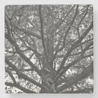 Stenkustfartyg, träd, svartvitt foto stenunderlägg