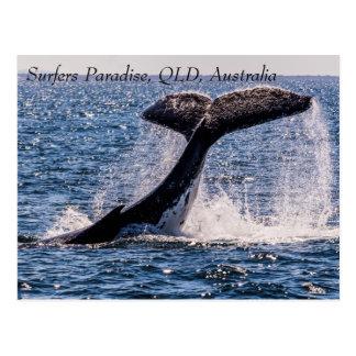 Stilla hav för paradis för puckelryggvalsurfarear vykort