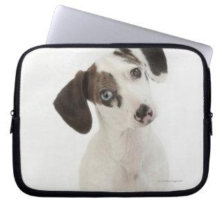 Stirra för valp för tax/för Chihuahua kvinnligt Laptop Sleeve