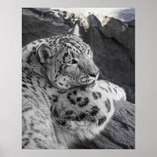 Stirrande för isig för snöLeopard Poster