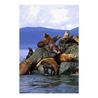 Stjärn- sjölejon Alaska; USA Fototryck