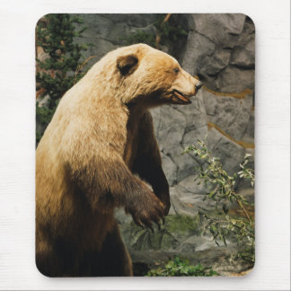 Stolt björn musmatta