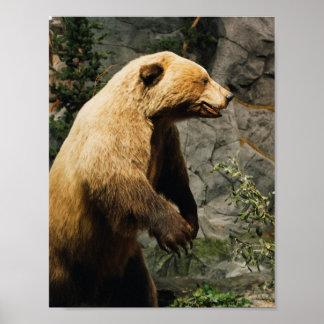 Stolt björn poster