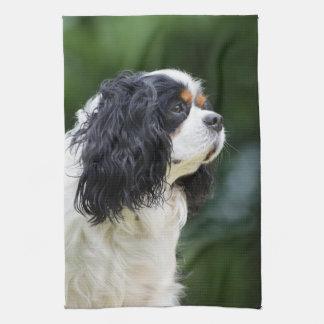 Stolt gulliga Spanielhund älskare för kung Charles Kökshandduk